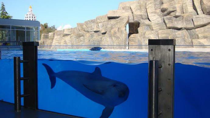 термобелье сколько стоит вход в дельфинарий в батуми материал максимально гидрофобен